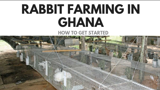 Rabbit Farming In Ghana